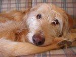 Dog bed??