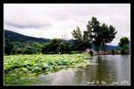 黟縣 宏村古民居  (File0508svc)