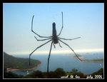 途中竟然見到隻大蜘蛛,嚇死我!