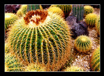 cactus garden 仙人掌公園