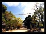 nagasaki suwa jinja 長崎諏訪神社