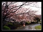 maizuru park in fukuoka 福岡舞鶴公園