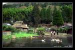 yufuin kinrin pond  湯布院金鱗池