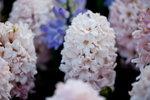 FLOWER-021-rz