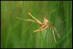 �����Y�참 ������a���� ��Grass Puppet. Hongkong Wetland Park