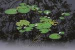���e��p�� ��a���� ��Flower & Leaf Series F(0914). Wetland Park