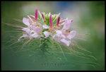 �������骺�ᦷ ��a���� ��Flower & Leaf Series F(0915). Wetland Park