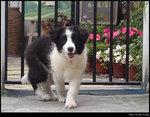 dog_03s