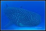 Underwater_4135