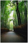 �D�o�P�s Saga Arashiyama