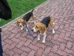 Faggy & Snoopy