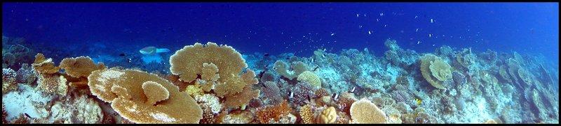 Maldives (Paradise in the world) DSC00531