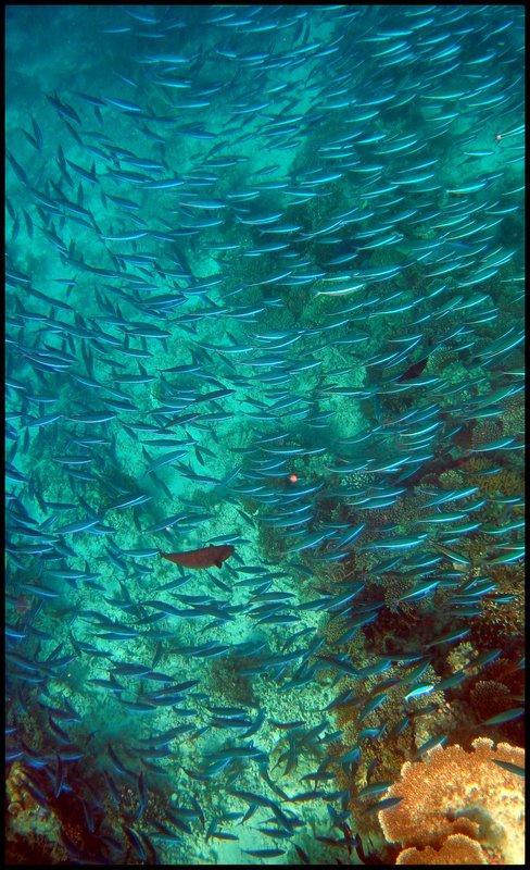 Maldives (Paradise in the world) DSC00545