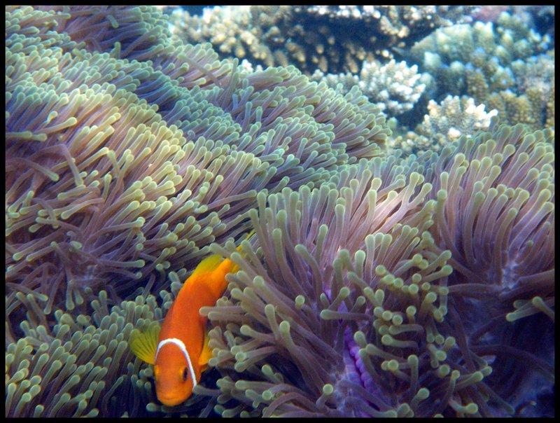 Maldives (Paradise in the world) IMGP5074