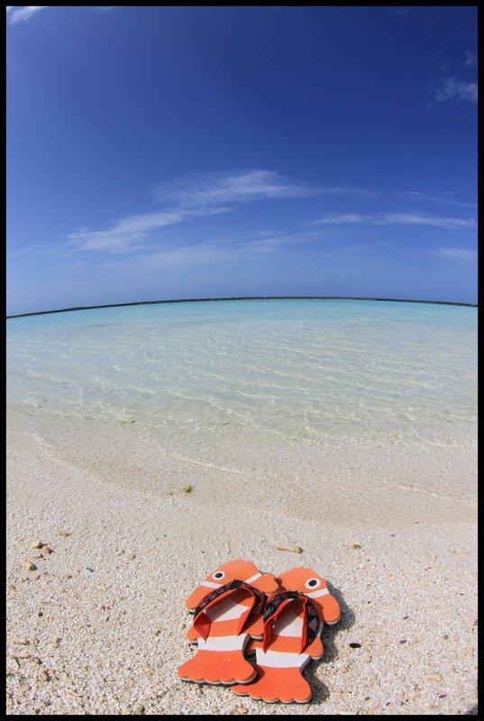 Maldives (Paradise in the world) IMG_4700
