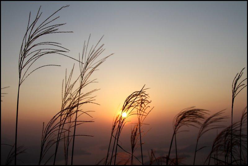 Star Trail & Sunrise IMG_0415