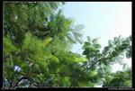 06-09-23-J_nEO_IMG