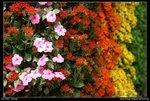 2007-03-16@HK flower show-02
