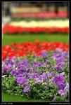 2007-03-16@HK flower show-06