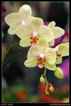 2007-03-16@HK flower show-07