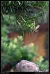 07-09-16@Chi Lin Nunnery-05