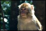 annie-monkey-3
