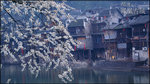 Fenghuang_poster