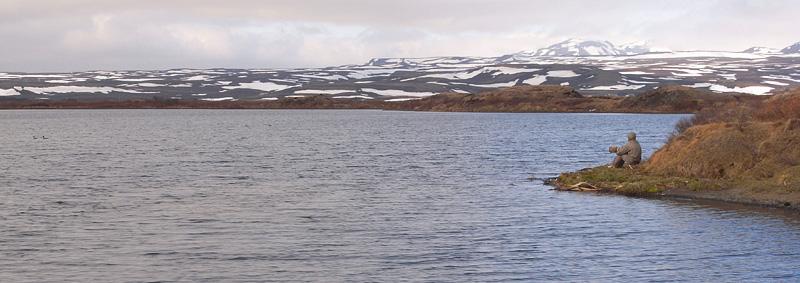 birding at Myvatn Lake