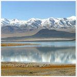 tibet d070-test