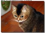 cat0002
