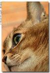 cat0003