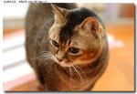 cat0004