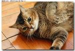 cat0006
