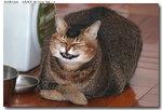 cat0008