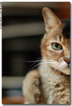 cat0012