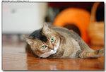 cat0015