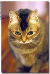 cat0022
