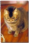 cat0023