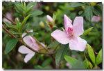 flower_006