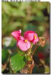 flower_018