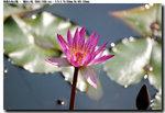 flower_020