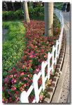 flower_031