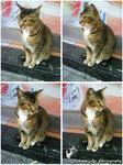 catcat copy