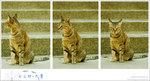 3x1_cat