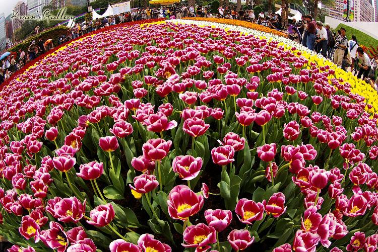 香江花卉展,我和K100D的第一次