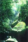 """Deep in the stream 深澗中"", 5/5/2002"