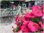 081224 bike 021