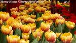 FlowerShow44