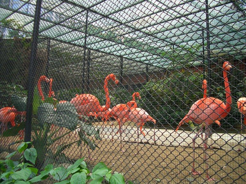 Hong Kong Zoological And Botanical Gardens Hkzbg