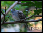 IMG_0271a